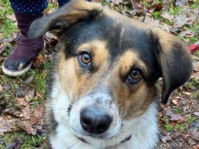 Unser süßer Schulhund Camino!