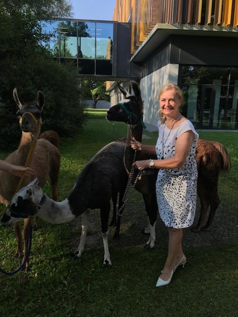 Lamas zu Besuch in der Schule – 2. Klassen